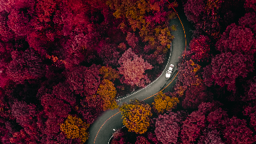Curvy Road in Pink Forest