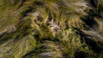 Swampy Grasses