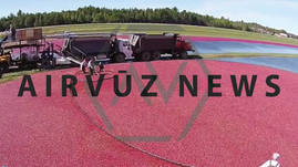 AV News: Cranberries Harvest, From The Vine To Your Table