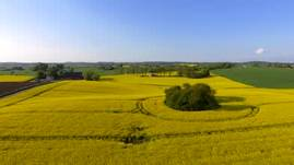 Love this time, Yellow fields over Skåne, Sweden
