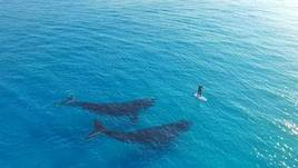 Paddle Boarding with Whales, Esperance Island Cruises