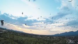 Flying FPV with bats. Nothing like it.