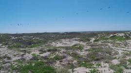 South Texas Beach
