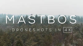 Mastbos forrest in Winter, The Netherlands